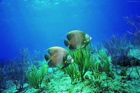 wallpaper hd underwater wallpaper hd underwater desktop wallpapers