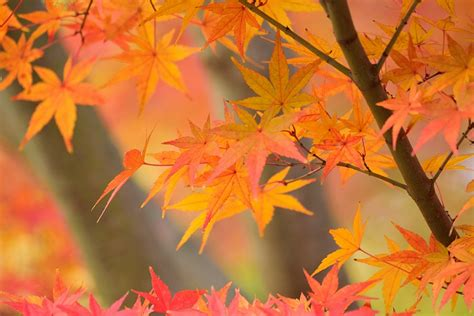 the science behind why leaves change color in the fall stemjobs