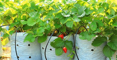 innaffiare fiori vacanza 4 soluzioni per innaffiare le piante in vacanza