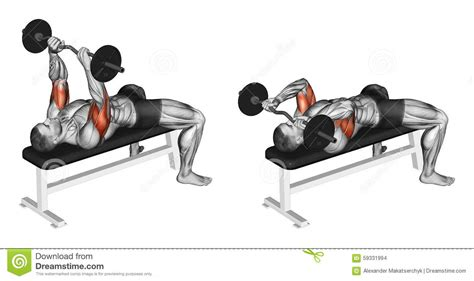 bench press in french exercising french press with a barbell lying stock