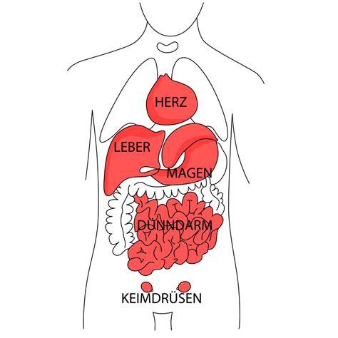 innere organe bilder r 252 ckenschmerzen aufgrund erkrankungen der inneren organe