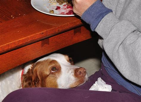 Table Food For Dogs by New Take On Feeding Your Table Scraps Is It Actually