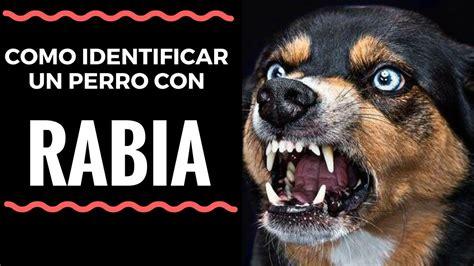 libro la rabia y el sintomas de la rabia en perros salva tu vida y la de tu perro youtube