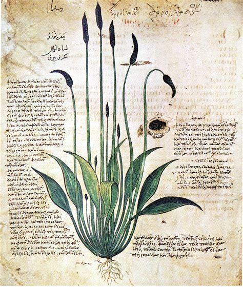 fiori medicinali piante officinali piante medicinali e piante aromatiche