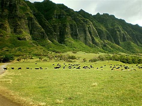 Kualoa (Kaneohe, HI): Top Tips Before You Go (with Photos)   TripAdvisor
