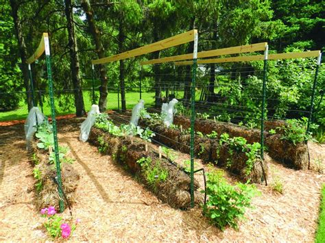 Hay Bale Garden by Straw Bale Gardening Can Increase Your Yield Startribune