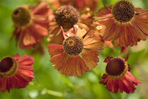 10 top fall blooming flowers 42 best about com etc images on pinterest celebs