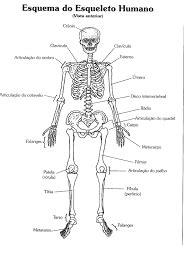 esqueleto humano - Pesquisa Google   esqueleto   Pinterest