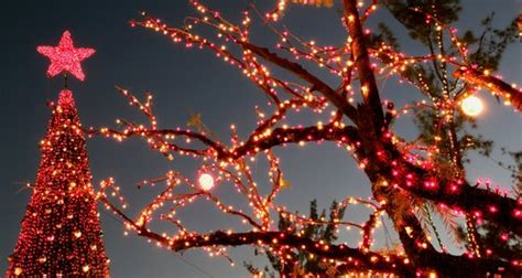 brain tree light up freeport braintree are lighting up essex