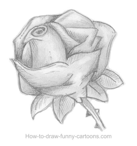 Sketches Exles by Sketches Of Roses