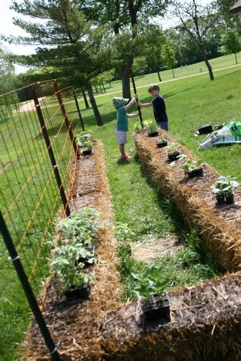 Straw Bale Planter by Introduction To Straw Bale Gardening Gardens Planters