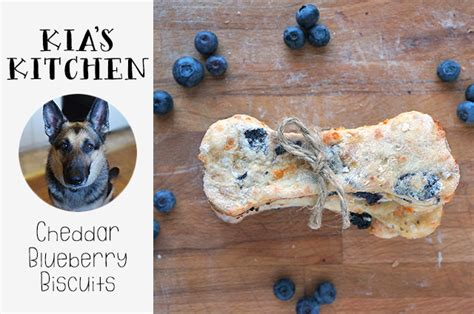 are blueberries bad for dogs cheddar blueberry biscuits blogher