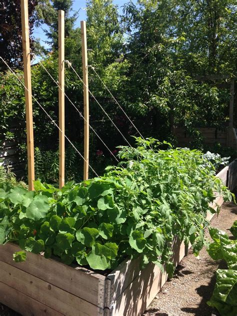 kitchen garden ideas 30 best edible gardens go global images on