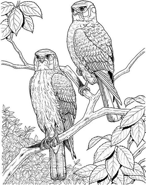 coloring page falcons falcons pinterest