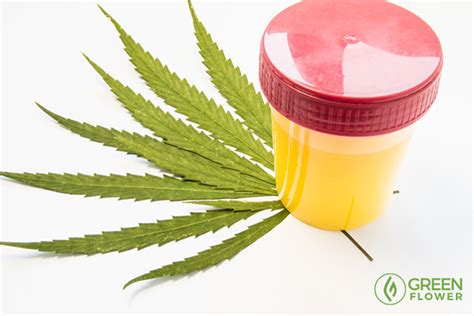 Thc Detox Time Frame by How Can You Detox When You Consume Cannabis