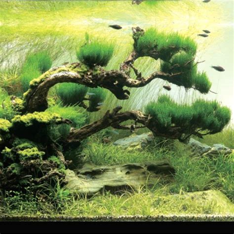 takashi amano aquascaping techniques 17 best images about aquascape on pinterest urban