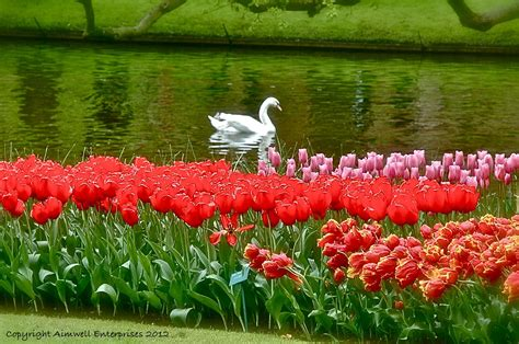 images of gardens swan keukenhof gardens holland eyes to heart