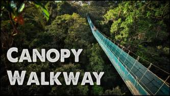 What Is A Canopy In The Rainforest by World S Largest Rainforest Canopy Walkway Virtual Tour