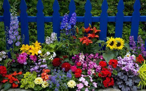 imagenes de jardines de rosas de colores cerca con coloridas flores imagen de flores de colores