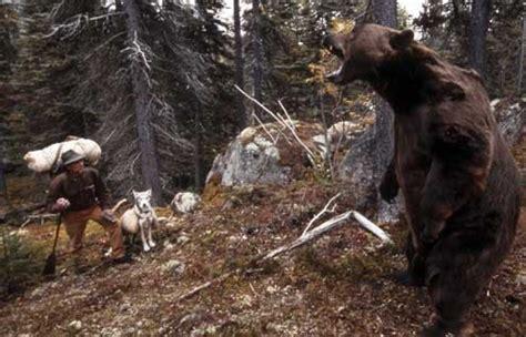 regarder vf la chasse à l ours r e g a r d e r 2019 film photo du film le dernier trappeur photo 12 sur 17 allocin 233