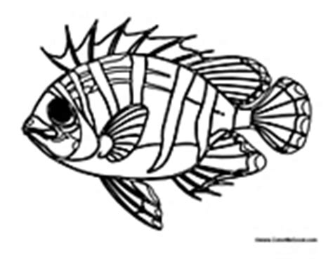 zebra fish coloring page how to draw zebrafish