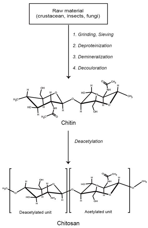 molecular weight math bench polymers free text low molecular weight chitosan