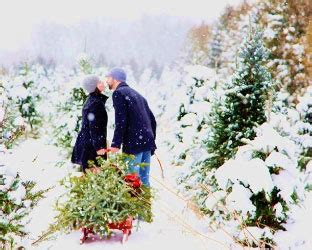 choose and cut your christmas tree at suydam farms