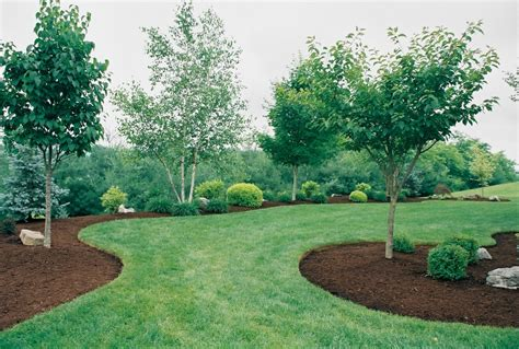 landscape beds spring has sprung quality care the nature care company