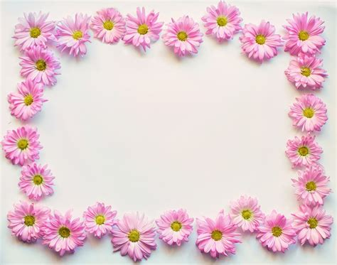 images of borders pink daisies border frame 183 free photo on pixabay
