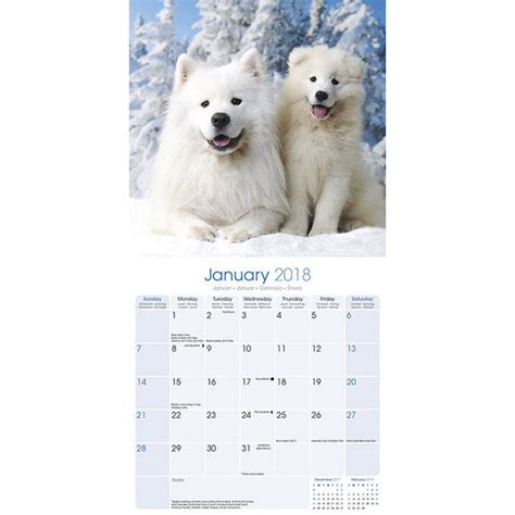 Calendrier Chien 2018 Calendrier 2018 Samoyede