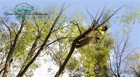 tree trimming the benefits of tree trimming in san gabriel valley your