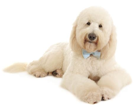 excessive shedding or matting it s essential to your