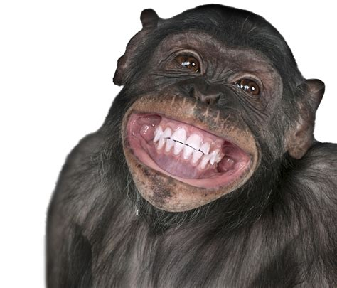 monkey with monkey smiling meme