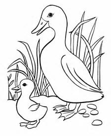 baby duck colouring pages