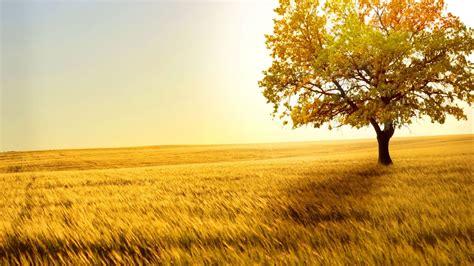 x tree 1920x1080 tree desktop pc and mac wallpaper