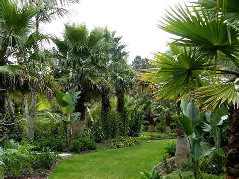 Palm Gardens by Wallpaper Garden Palm Garden New Zealand Free Desktop Wallpaper In The Resolution