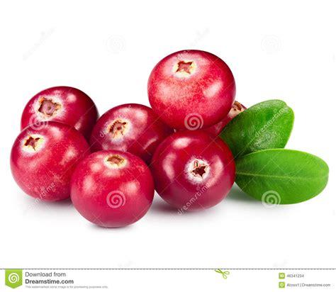 Suplemen Cranberry cranberries stock image cartoondealer 37202497
