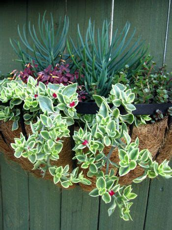 Succulent Hanging Basket Hanging Basket That Will Garden Wall Hanging Baskets