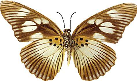 imagenes mariposas doradas 174 colecci 243 n de gifs 174 gifs de mariposas