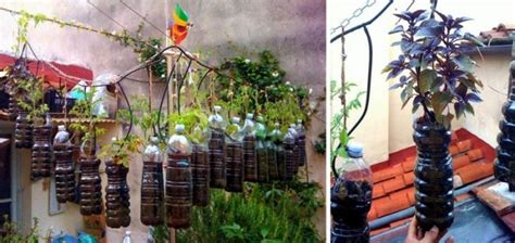 diy hanging herb garden how to make diy hanging herb garden with recycled soda