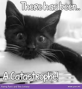 8 visual cute cat puns pun