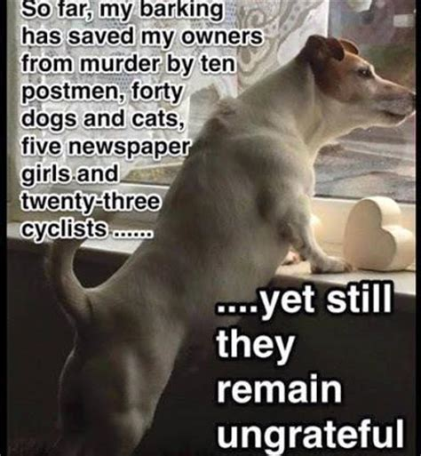 Barking Dog Meme - funny dog my barking has saved my owners