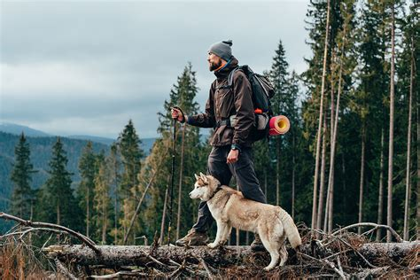 hiking dogs 10 best hiking breeds hiconsumption