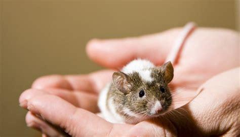 pet mice eat animals momme