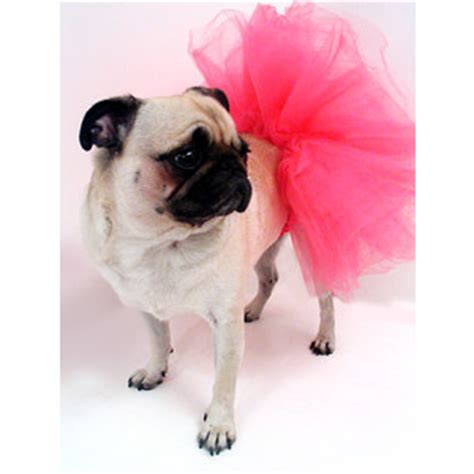 pug in a tutu pug in a tutu merrylog daily photos of the princess p polyvore