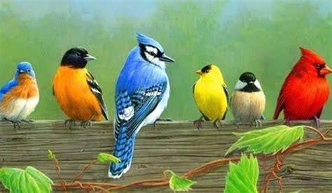 murai batu foto burung kolibri ninja jantan my 2nd blog membedakan ciri ciri burung lovebird jantan dan betina