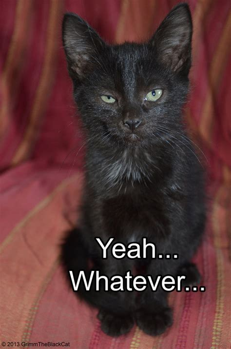 Black Cat Memes - grimm the black cat meme yeah whatever by