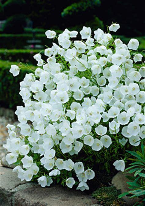 fiori di bacche a cosa servono come fare un giardino roccioso giardinaggio piante e fiori