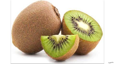 Bibit Buah Kiwi gambar gambar buah kiwi gambarpedia mangga kartun di rebanas rebanas