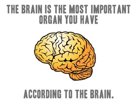 Neuroscience Meme - neuroscience all kinds of minds page 2
